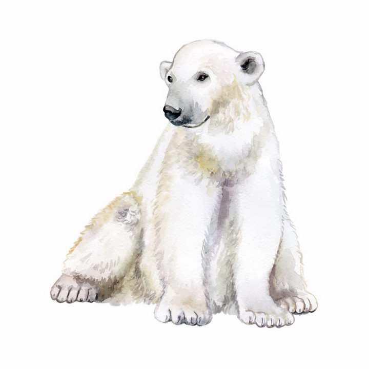 水彩画风格坐在地上的北极熊野生动物png图片免抠矢量素材