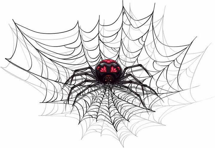 漫画风格蜘蛛网上的一只有毒蜘蛛png图片免抠矢量素材