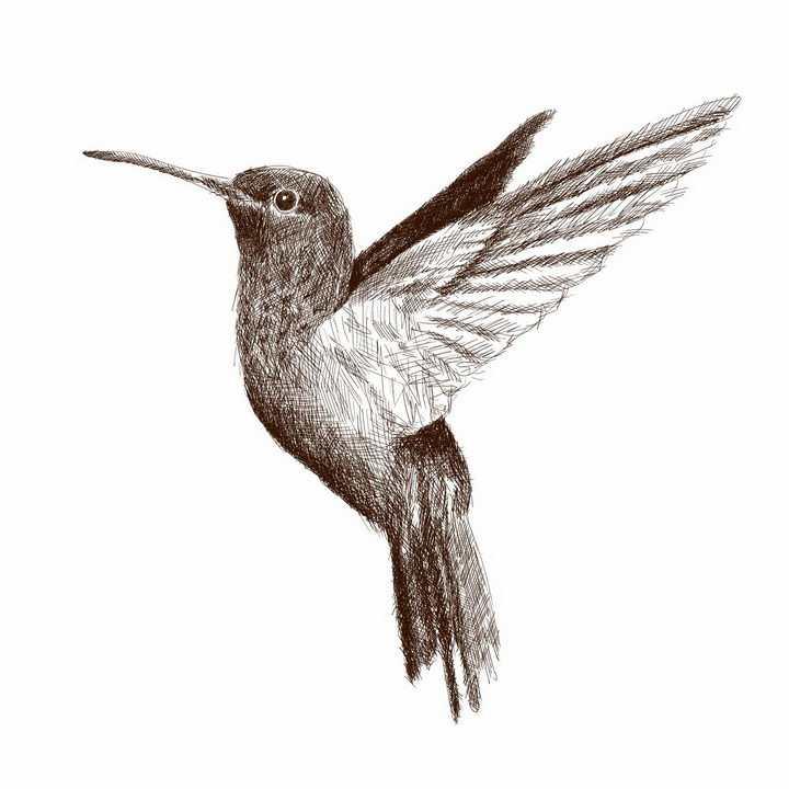 手绘涂鸦风格飞行中的蜂鸟png图片免抠矢量素材