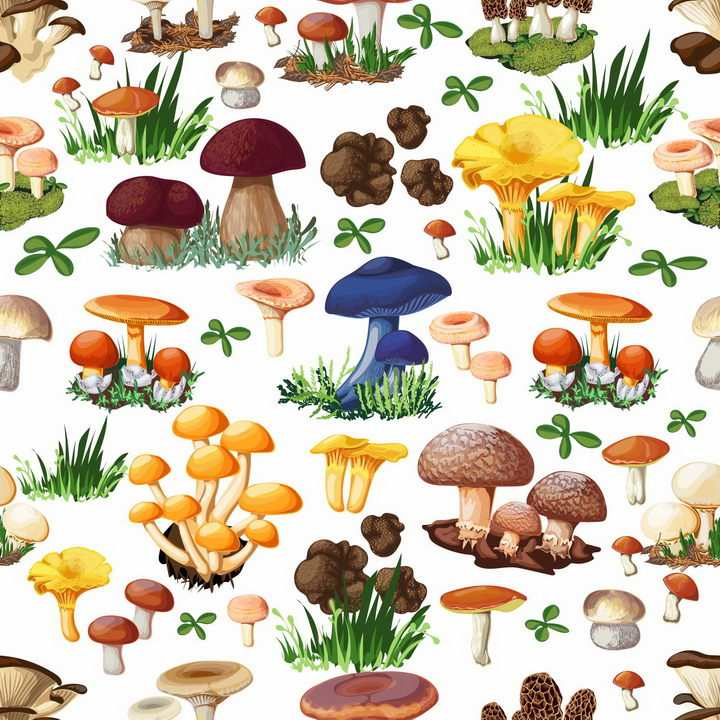 白黄侧耳深凹杯伞木耳平菇羊肚菌毒蝇伞大白口蘑松口蘑金针菇香菇等蘑菇美味美食png图片免抠矢量素材