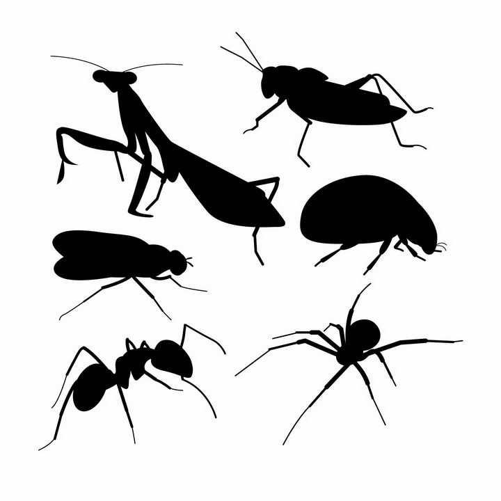 螳螂甲虫蚂蚁蜘蛛等昆虫虫子剪影png图片免抠矢量素材
