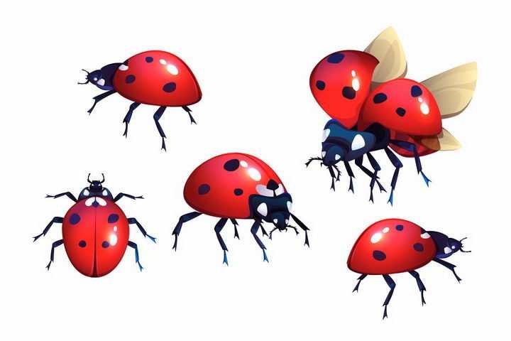 各种动作准备起飞的七星瓢虫小昆虫png图片免抠矢量素材