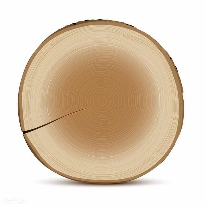 有裂纹的大树树木横切面年轮图案png图片免抠矢量素材