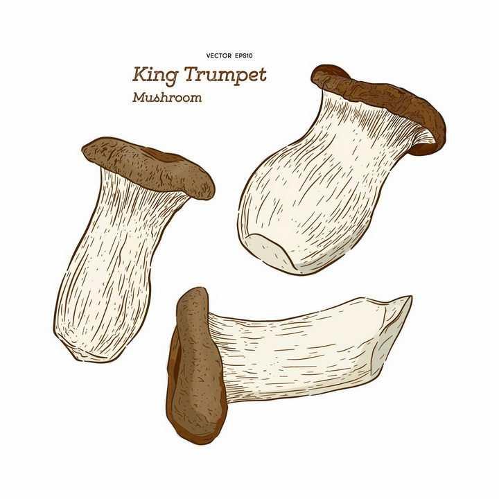 手绘风格杏鲍菇美味蘑菇美食png图片免抠矢量素材