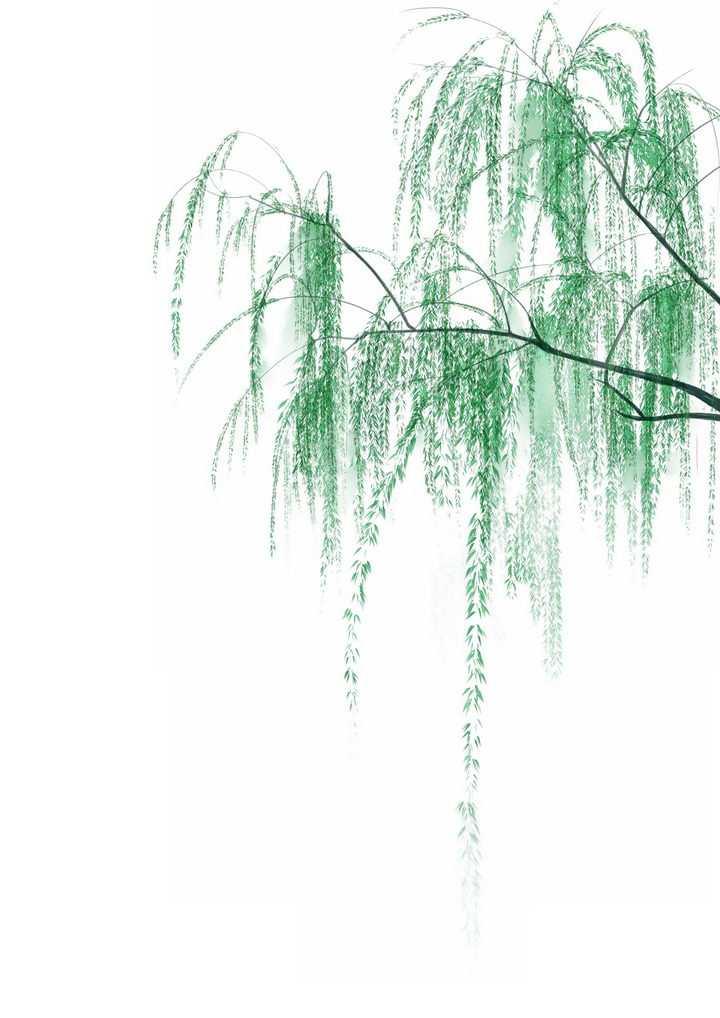 逼真下垂的柳树柳枝装饰png图片免抠素材