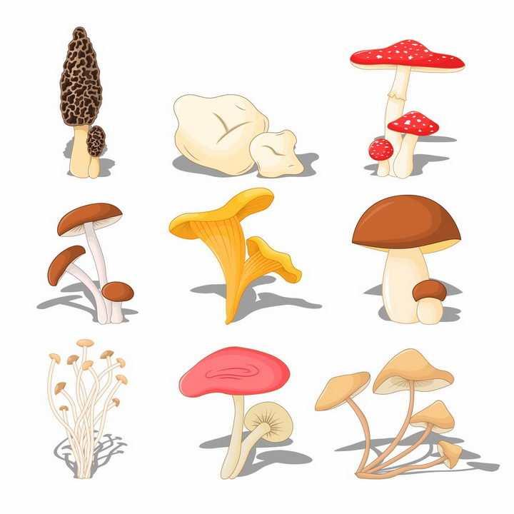 羊肚菌毒蝇伞大白口蘑松口蘑金针菇香菇等蘑菇美味美食png图片免抠矢量素材