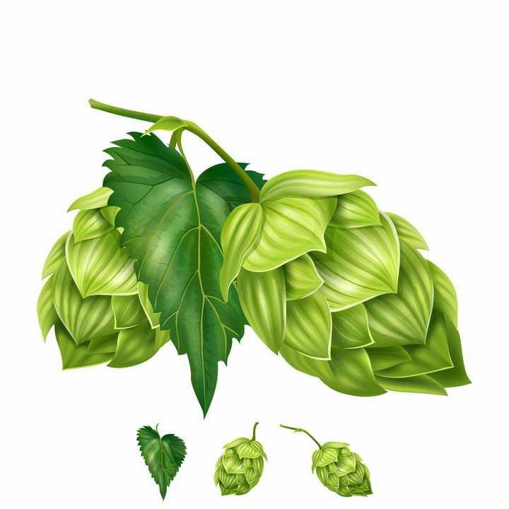 带绿叶的啤酒花啤酒酿造原料png图片免抠矢量素材