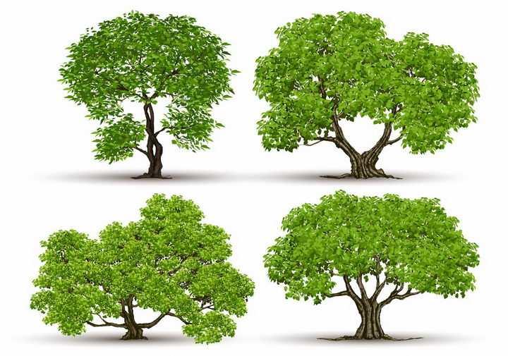 4棵郁郁葱葱的大树树木绿树盆景树png图片免抠矢量素材