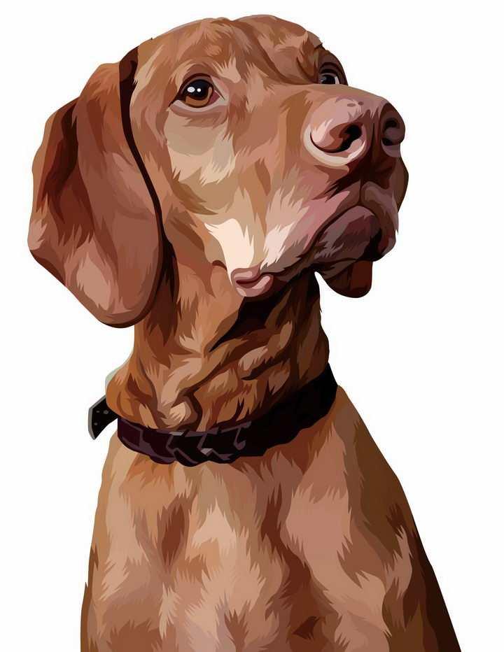 彩绘圣伯纳犬宠物狗品种png图片免抠矢量素材