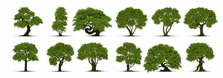 12棵园艺景观大树绿树盆景树png图片免抠矢量素材