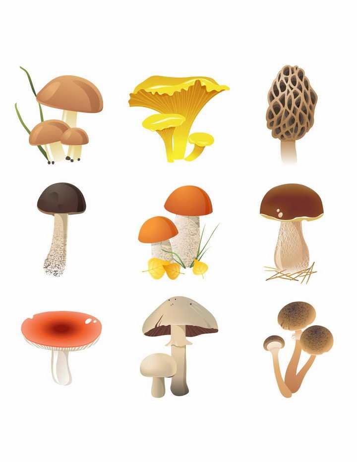各种手绘风格白黄侧耳深凹杯伞木耳平菇羊肚菌大白口蘑松口蘑香菇等蘑菇美味美食png图片免抠矢量素材