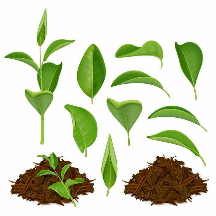 各种绿色叶子茶叶和干燥后的茶叶绿茶饮料png图片免抠eps矢量素材
