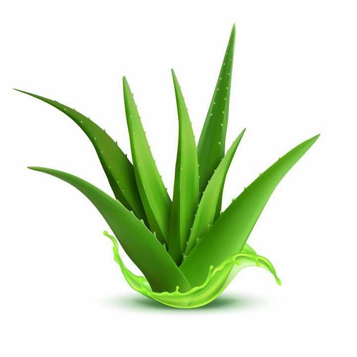 翠绿色水润的芦荟胶植物精华png图片免抠EPS矢量素材