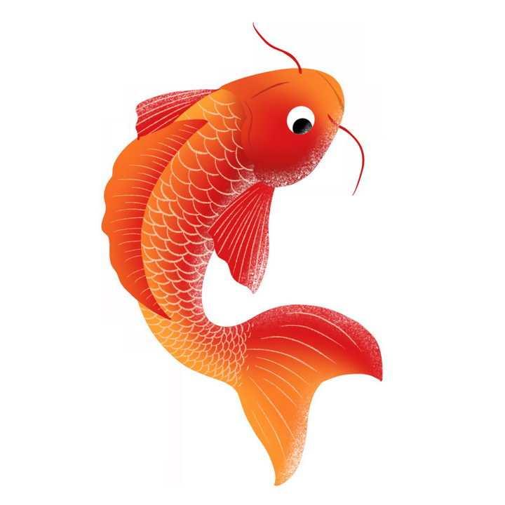红色的鲤鱼锦鲤png图片免抠素材