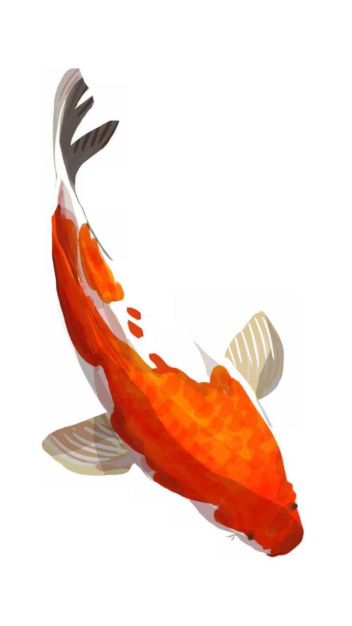 水墨画风格中国传统红色白色鲤鱼锦鲤png图片免抠素材