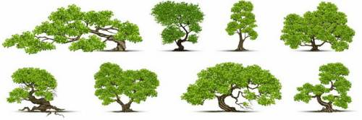 8棵园林景观盆栽盆景树png图片免抠矢量素材