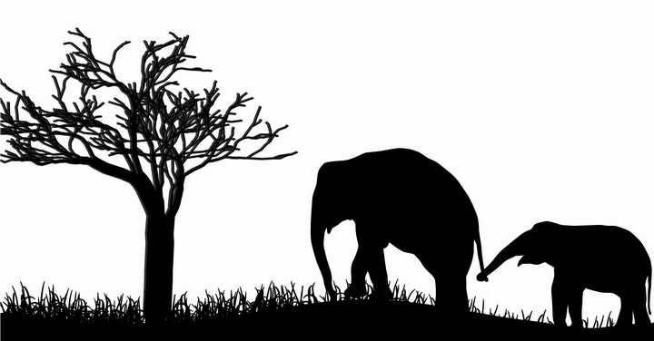非洲大草原草地上大树底下散步的大象母子非洲野生动物剪影png图片免抠矢量素材