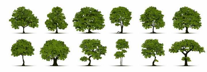 12棵各种形状的景观大树树木绿树盆景树png图片免抠矢量素材