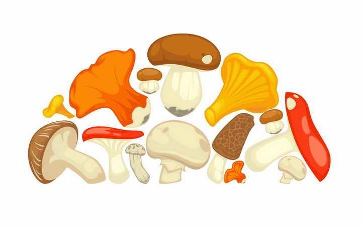 各种白黄侧耳深凹杯伞木耳平菇羊肚菌大白口蘑松口蘑香菇卡通蘑菇美味美食png图片免抠矢量素材