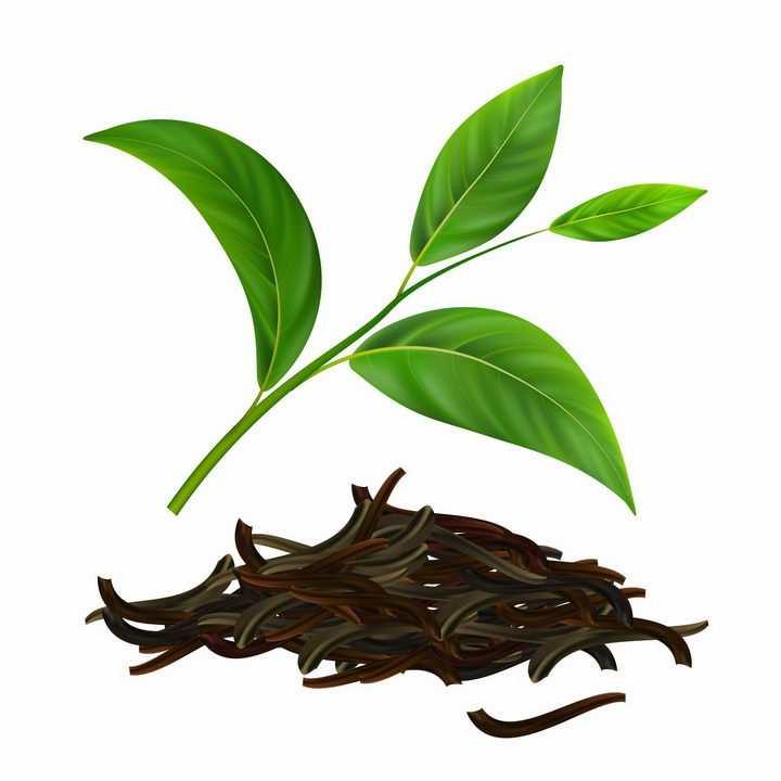 绿色的茶叶和干燥后的茶叶饮料png图片免抠eps矢量素材