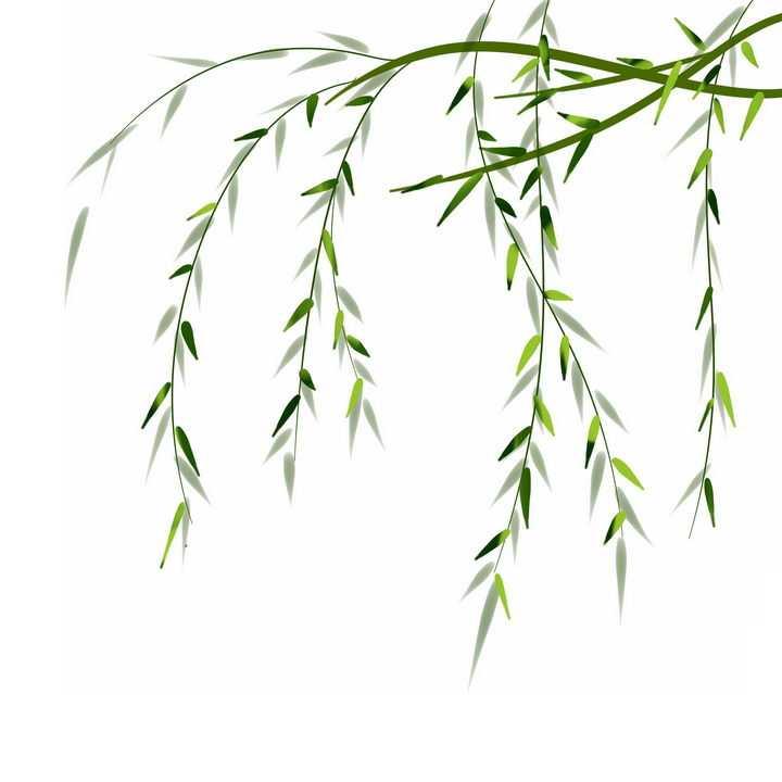 手绘风格春天里的柳树柳枝树枝png图片免抠素材
