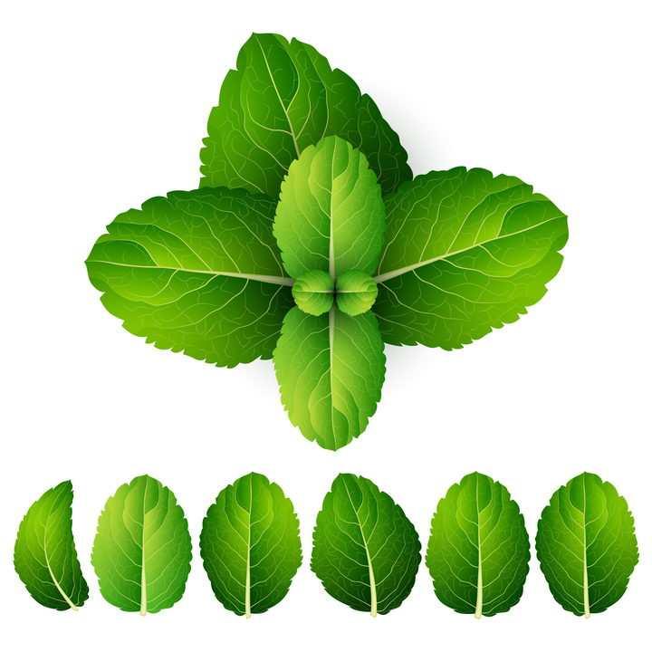 各种翠绿色的树叶叶子图片免抠矢量素材