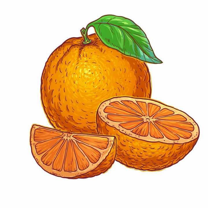 彩绘风格切开的橙子橘子美味水果横切面png图片免抠EPS矢量素材