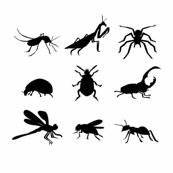 蚊子螳螂蜘蛛甲虫独角仙蜻蜓苍蝇蚂蚁等昆虫虫子剪影png图片免抠矢量素材