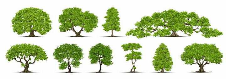 10棵郁郁葱葱的园林景观大树绿树盆景树png图片免抠矢量素材