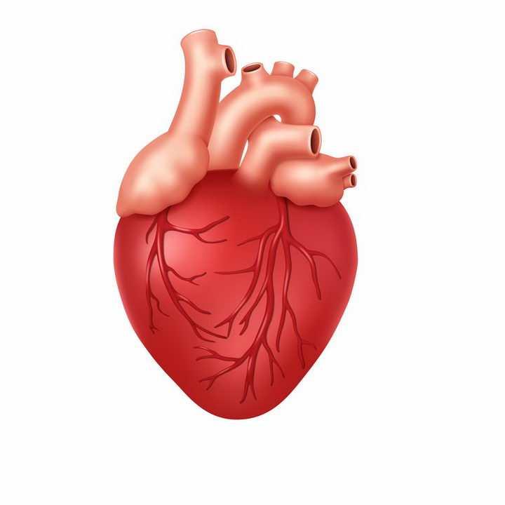 一颗红色的人体心脏人体组织器官解剖png图片免抠矢量素材