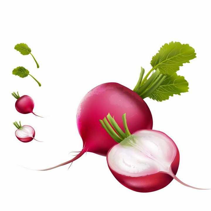 切开的红萝卜美味蔬菜横切面png图片免抠矢量素材