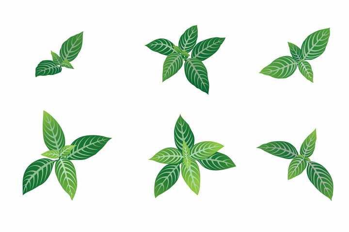 6款新发芽的绿色树叶子图片免抠矢量素材