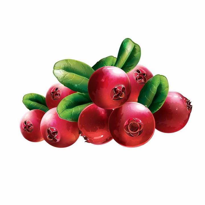 带叶子的红色蔓越莓美味水果浆果png图片免抠矢量素材