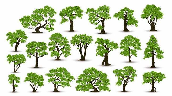 19款各种形状的郁郁葱葱的大树树木绿树成荫盆景树png图片免抠矢量素材