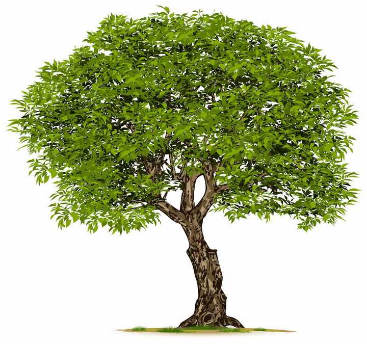 长满绿色树叶的大树园林景观png图片免抠矢量素材