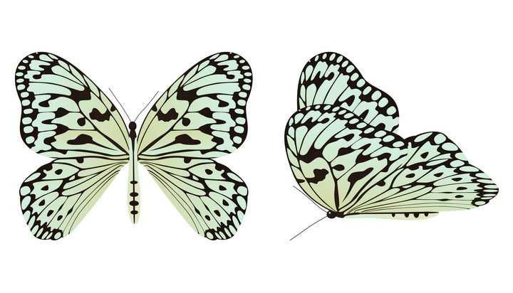 两款白底黑纹的蝴蝶昆虫图片免抠矢量素材