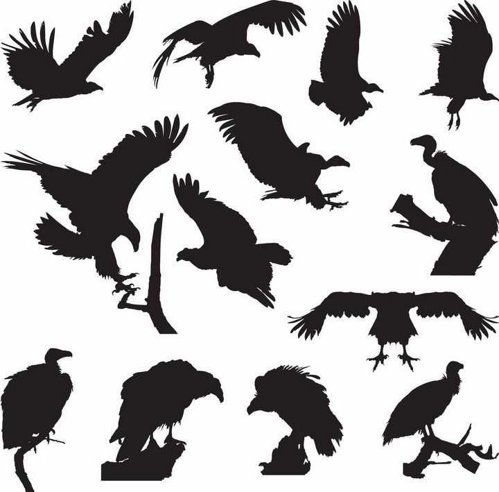 各种秃鹫猛禽鸟儿动物剪影png图片免抠矢量素材