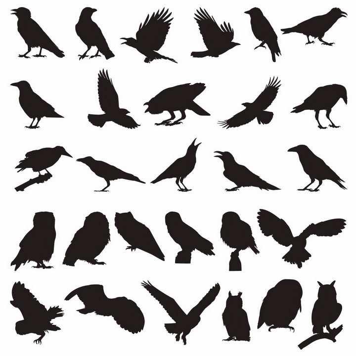 各种乌鸦鸽子猫头鹰老鹰等鸟类动物剪影png图片免抠矢量素材