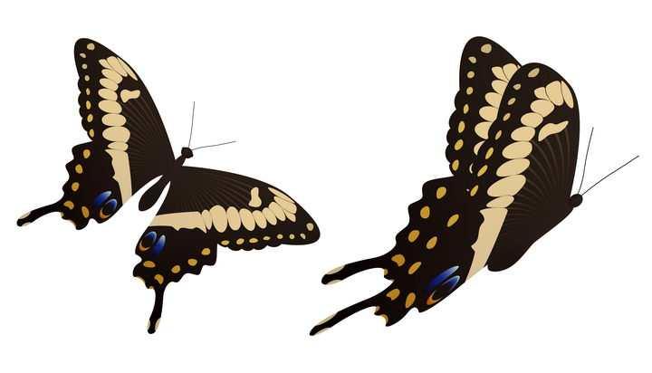 两款黑底黄纹漂亮蝴蝶昆虫图片免抠矢量素材