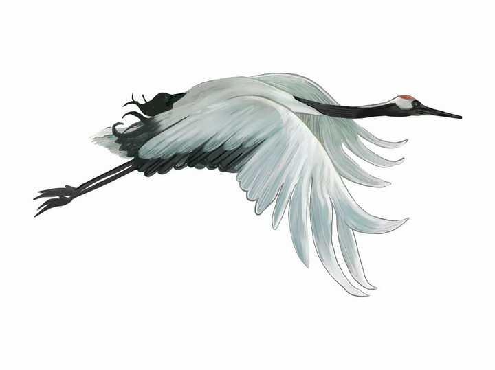 彩绘风格飞行中的仙鹤丹顶鹤png图片免抠矢量素材