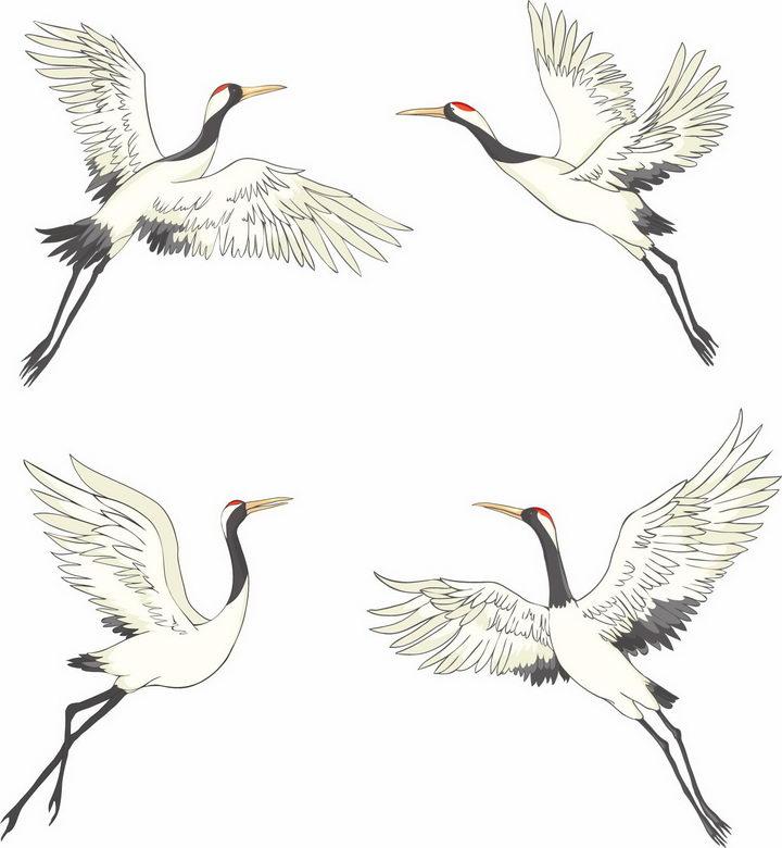 4个正在起飞的彩绘仙鹤丹顶鹤png图片免抠矢量素材 生物自然-第1张