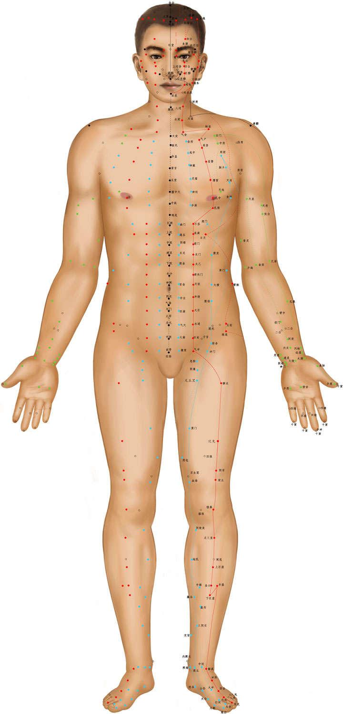 站立人体穴位正面图png图片免抠素材