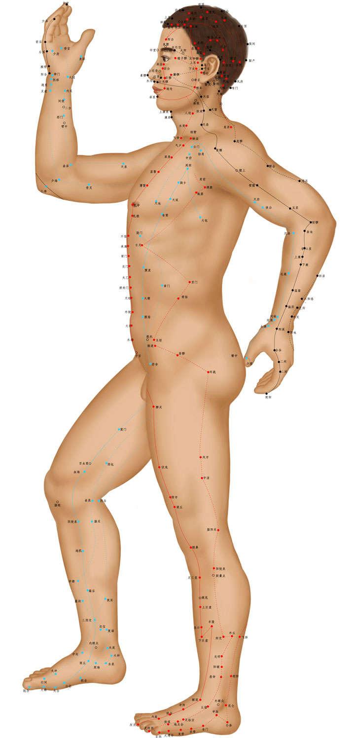 站立人体穴位侧视图png图片免抠素材