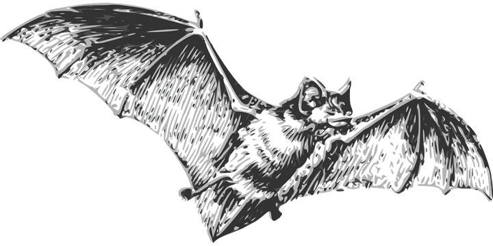 手绘蝙蝠野生动物png图片免抠素材 生物自然-第1张