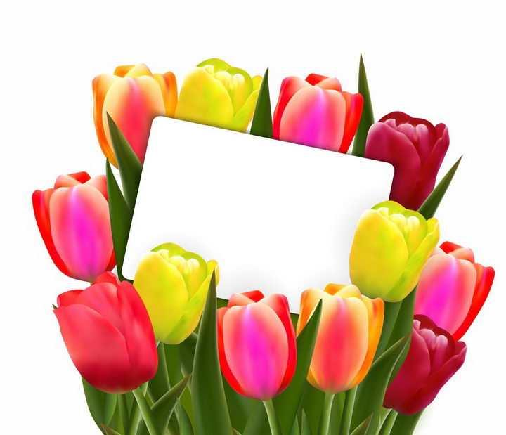 红色黄色郁金香花朵装饰的长方形白色背景框png图片免抠矢量素材