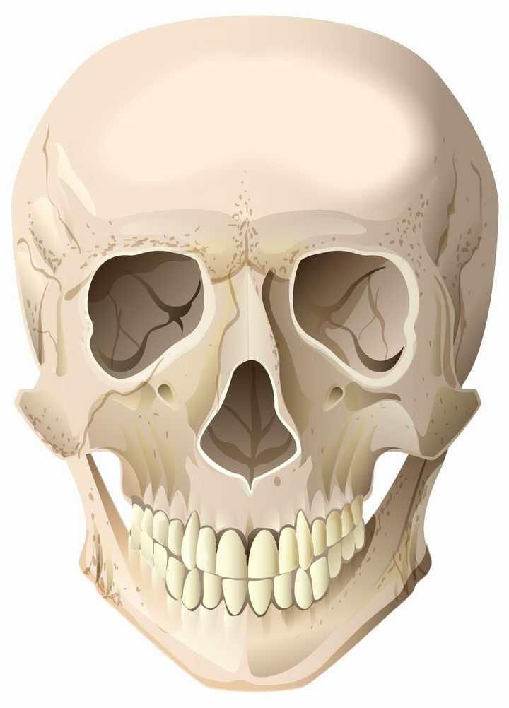 人类头骨骷髅头png图片免抠矢量素材