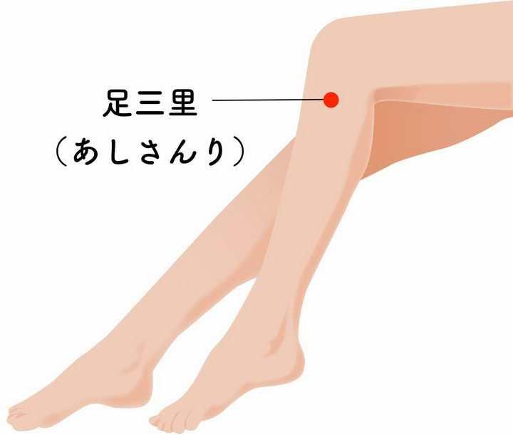 足三里的准确位置人体穴位图png图片免抠素材