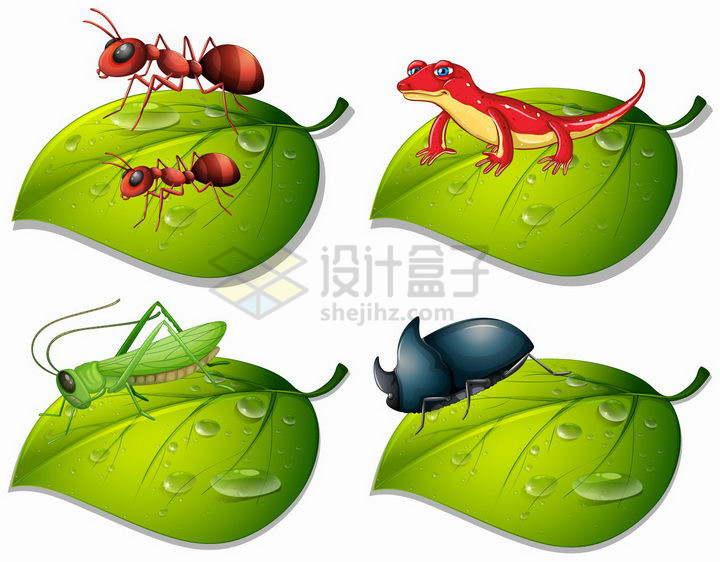 绿色树叶上的红蚂蚁蜥蜴蚂蚱蝗虫和独角大仙等昆虫png图片免抠矢量素材