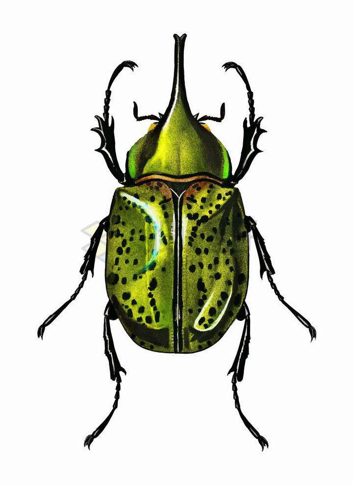 一只绿色的长戟大兜虫甲壳虫昆虫png图片免抠矢量素材