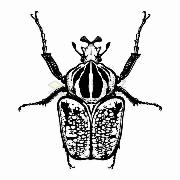 一只甲虫昆虫黑白插画png图片免抠矢量素材